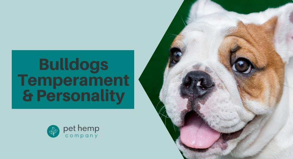 Bulldogs Temperament & Personality