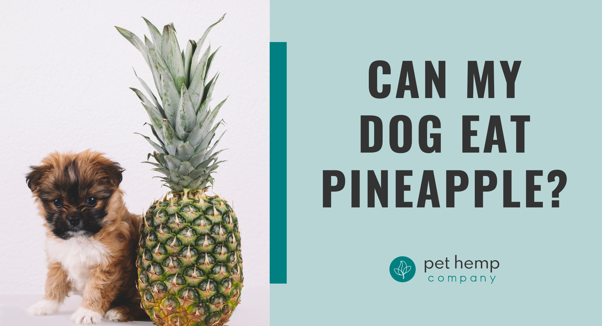 can my dog eat pineapple