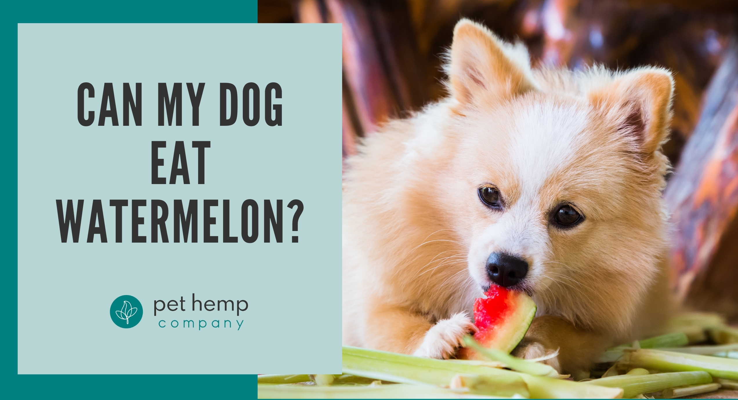 can my dog eat watermelon