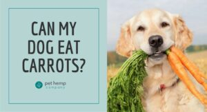 Can My Dog Eat Carrots?