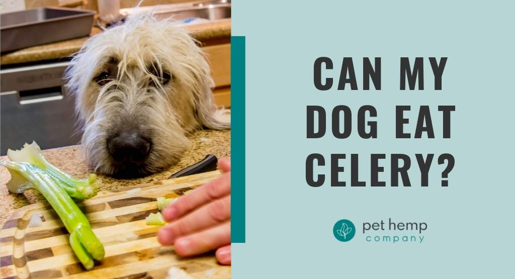 Can My Dog Eat Celery?