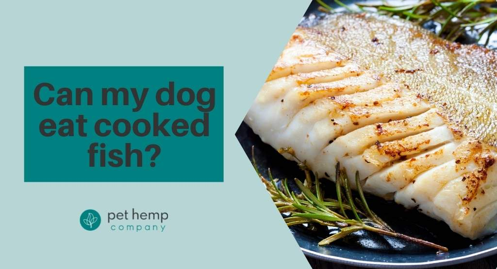 Can My Dog Eat Cooked Fish?