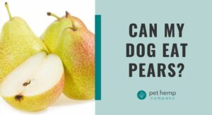 Can My Dog Eat Pears