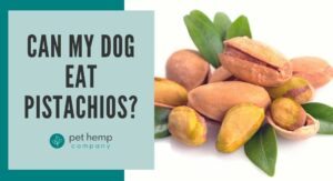 Can My Dog Eat Pistachios?