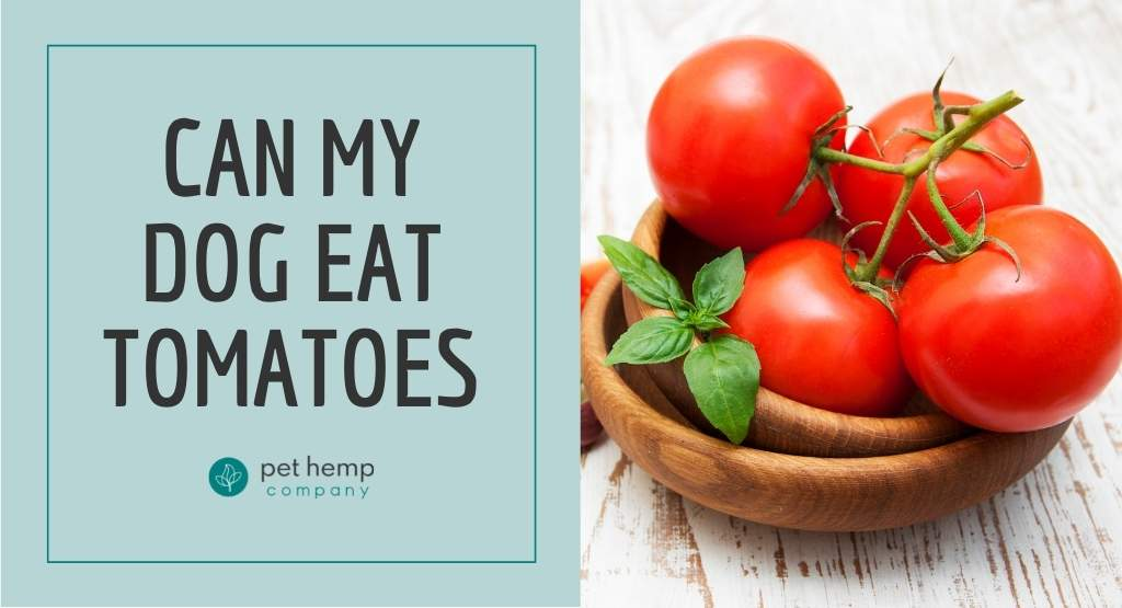 Can My Dog Eat Tomatoes