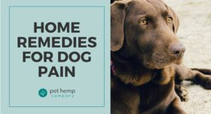 Home Remedies For Dog Pain