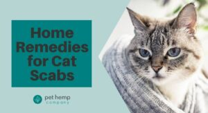 Home Remedies for Cat Scabs
