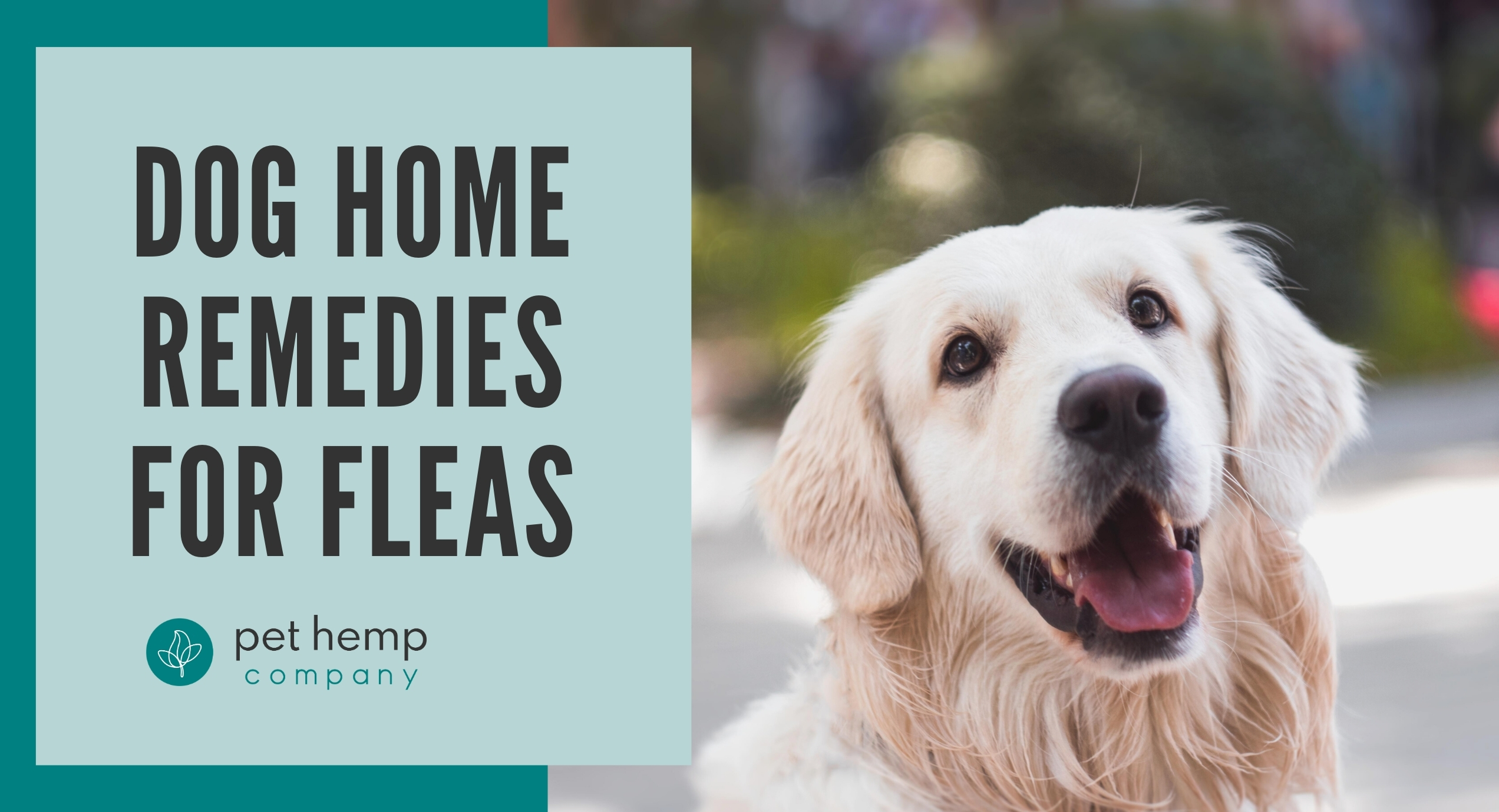 dog home remedies for fleas