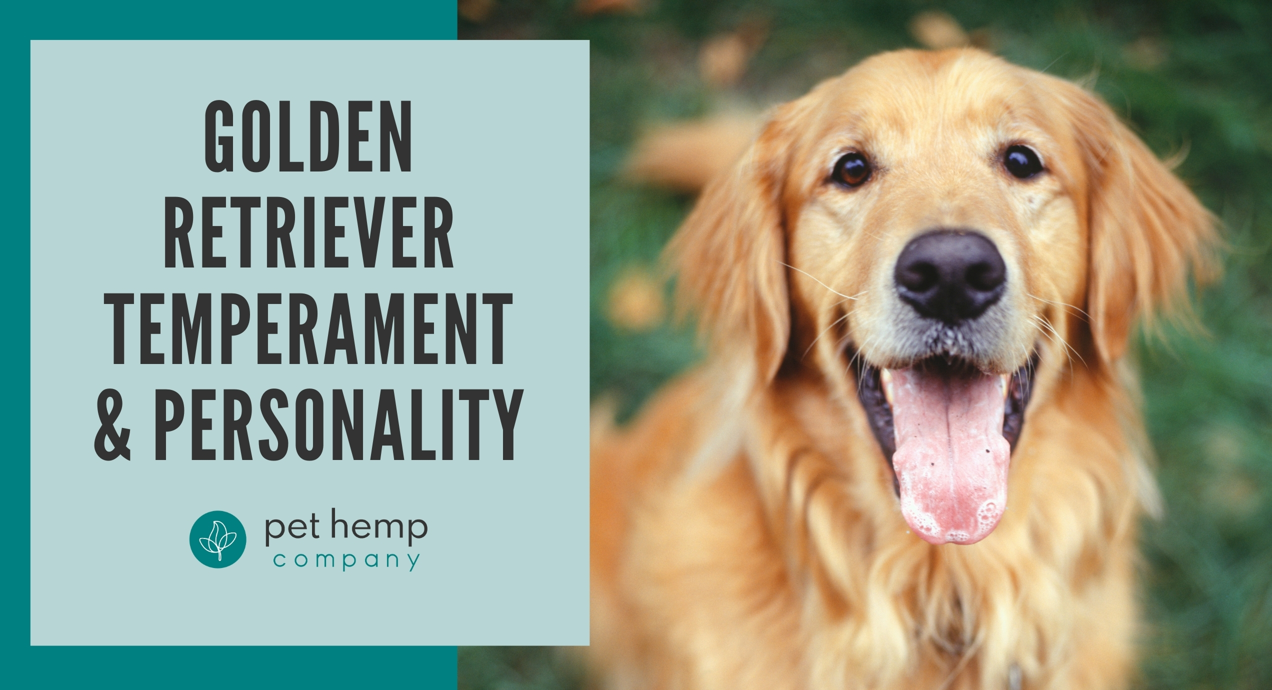 golden retriever temperament personality
