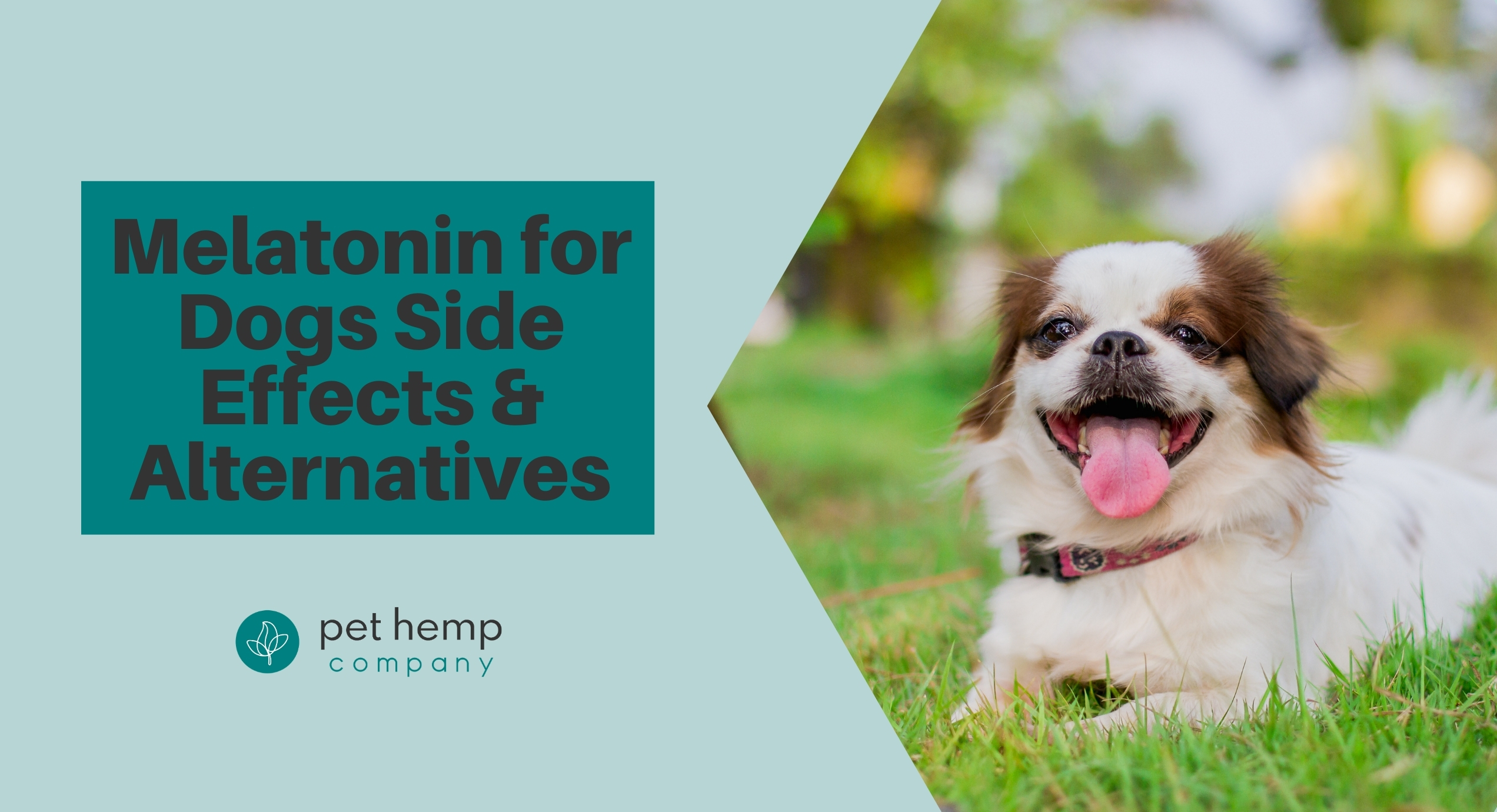 melatonin for dogs side effects alternatives