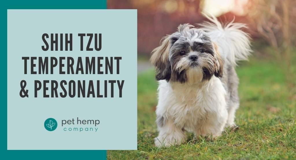Shih Tzu Temperament & Personality