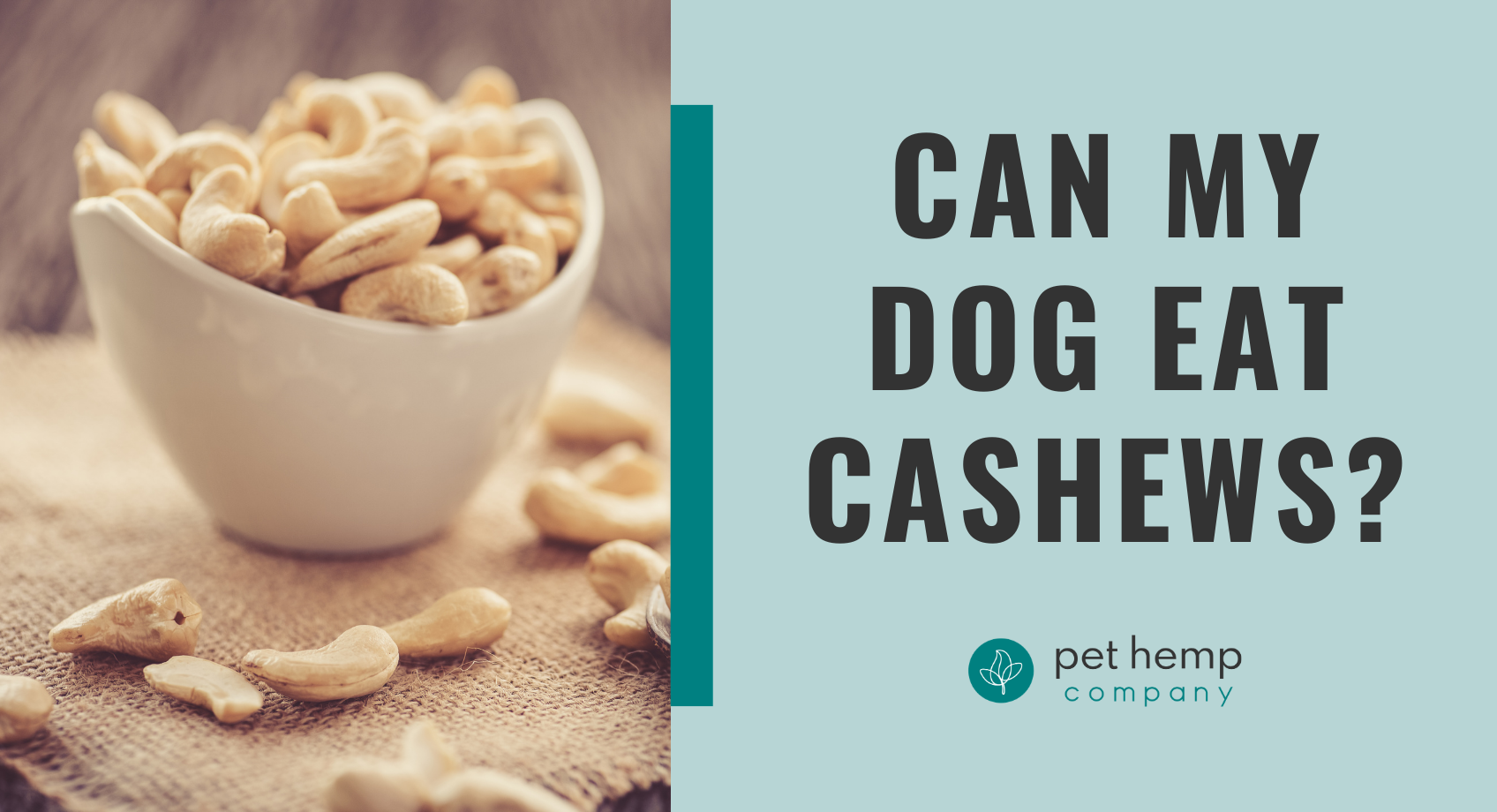Can My Dog Eat Cashews_