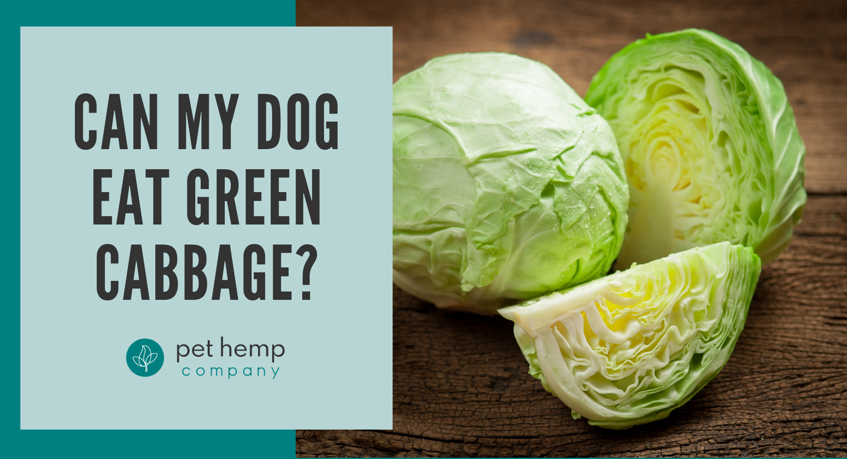 Can My Dog Eat Green Cabbage_