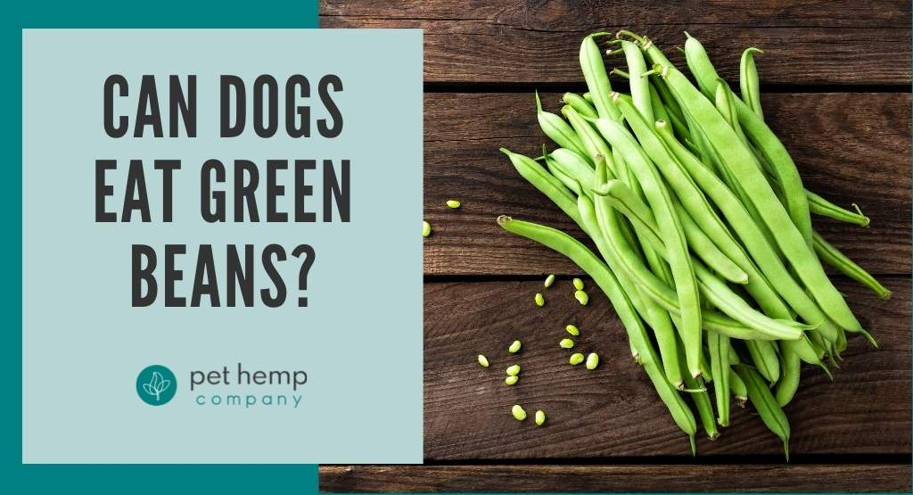 Can Dogs Eat Green Beans