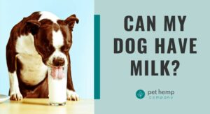 Can My Dog Have Milk?