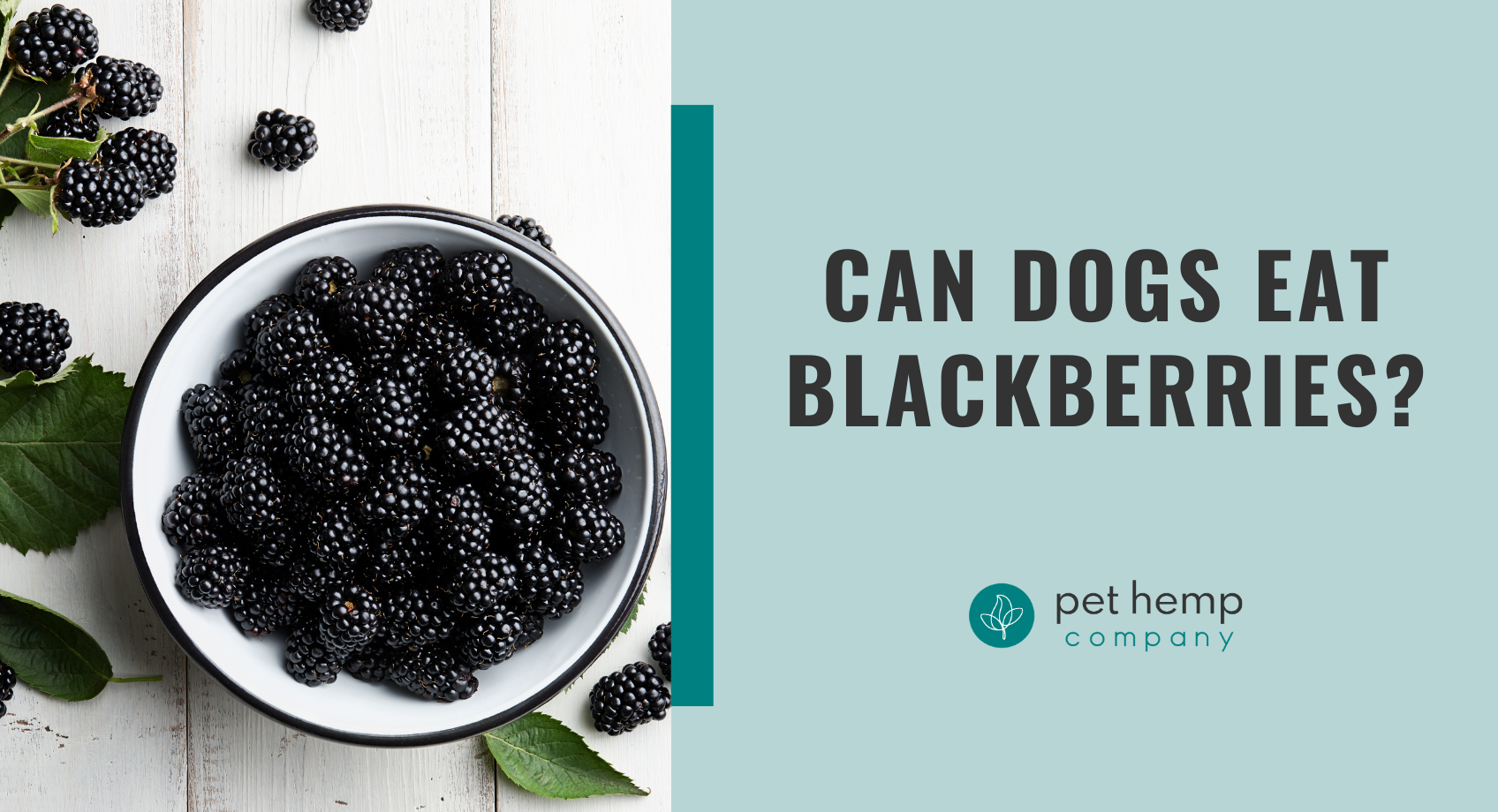 Can dogs eat blackberries_