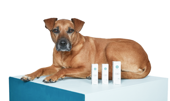 vector file of dog sitting on a block with pet hemp company products