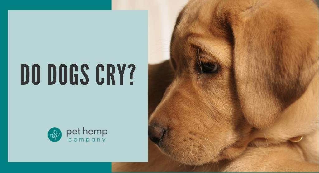 Do Dogs Cry?