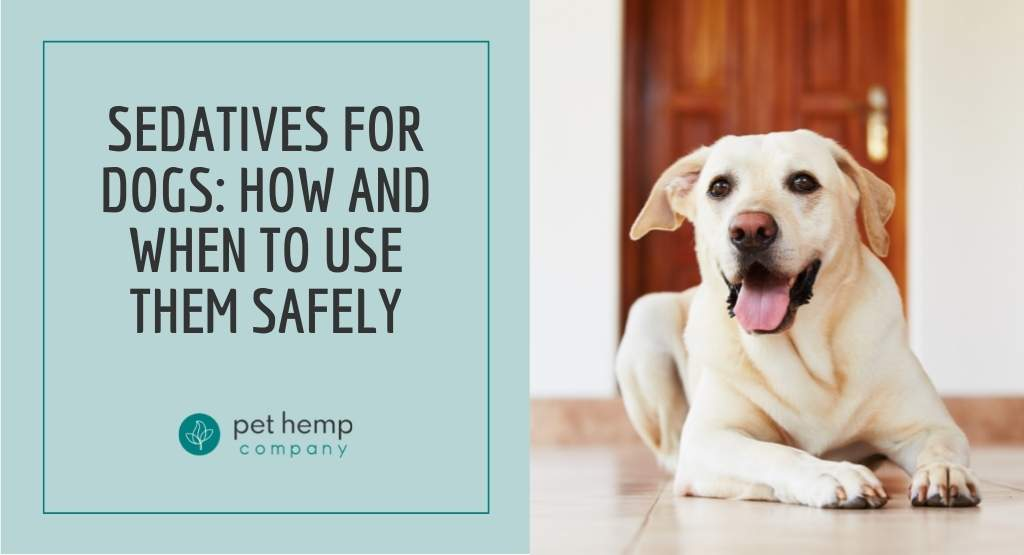 Sedatives for Dogs: How and When to use them Safely