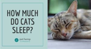 How Much Do Cats Sleep (1)