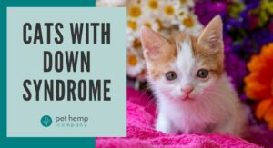 cats with down syndrome