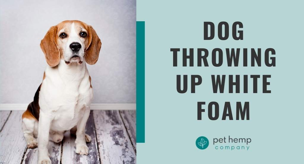 Dog Throwing Up White Foam