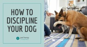 How To Discipline Your Dog