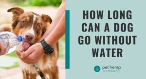 How Long Can a Dog Go Without Water