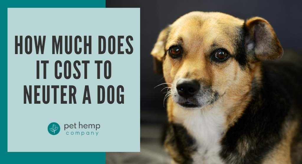 How Much Does It Cost to Neuter a Dog