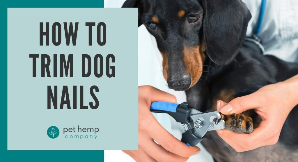 How to Trim Dog Nails