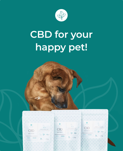 image of dog with cbd products happy pet
